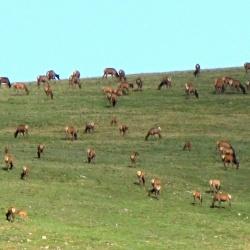Herd in the Sun