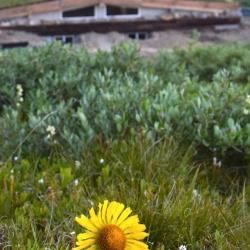 Wildflower and Hut